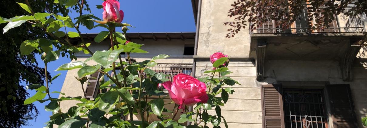 villa il maiale bianco ontbijttuin met roos en zuidzijde huis